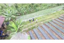 Padang Solok Sumatera Barat Tanah Perkebunan Murah