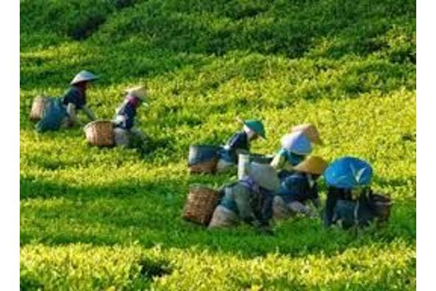 Investasi Tepat Tanah Kavling di Puncak Hanya 60 Jutaan Buy Back Guarantee 16510367