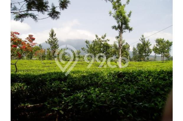 Investasi Tepat Tanah Kavling di Puncak Hanya 60 Jutaan Buy Back Guarantee 16510368