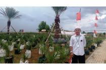 Tanah Kavling Termurah Kampung Kurma Cirebon Bogor Banten Lebak Bonus Umroh