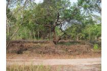 Lokasi cocok untuk Rumah atau Sarang walet