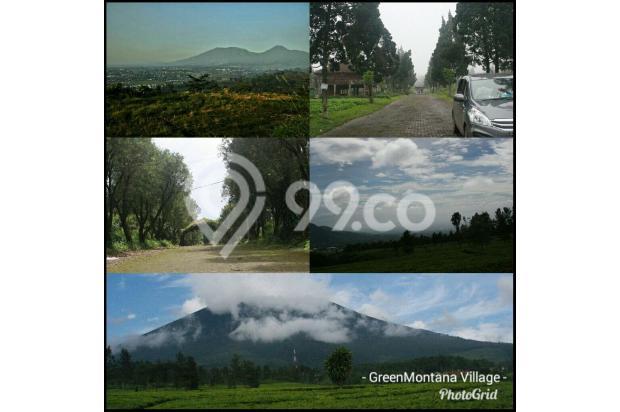 Green Montana Village, dikawasan kebun teh seluas 700Ha Puncak Cipanas 15829006