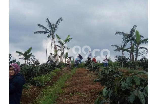 Investasi Masa Depan Tanah Kavling Murah Hanya 50 Jutaan/Kav Puncak Jabar 16224861