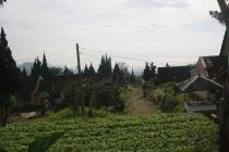 tanah kavling dijual murah di cugenang cipanas jalur dekat puncak