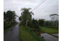 Tanah murah dan strategis di Ubud Gianyar Bali