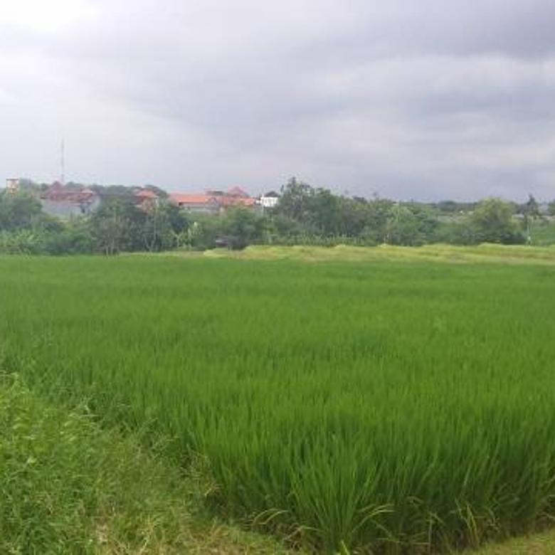 Tanah Berawa Canggu view sawah dan gunung