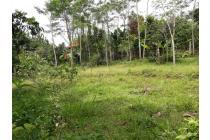 Tanah-Bogor-8