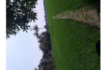 dijual tanah sawah di desa mampir cileungsi