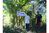Tanah Strategis di daerah Bulusan, pinggir Jl. Gatot Subroto