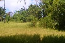 4.900 m2 View Tebing sungai 1,75 jt/m di Ubud Sekawati MUBD665