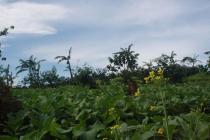Investasi Masa Depan Tanah Kavling Murah di Puncak Jawa Barat