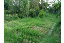 Dijual Tanah untuk Perkebunan Bunga dan Hunian, Homestay