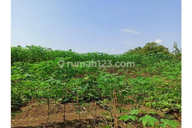 Tanah Strategis Cocok Usaha di Kawasan Industri, Indramayu , Jawa Barat