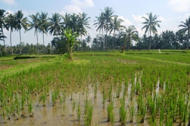 Rp4,34mily Tanah Dijual