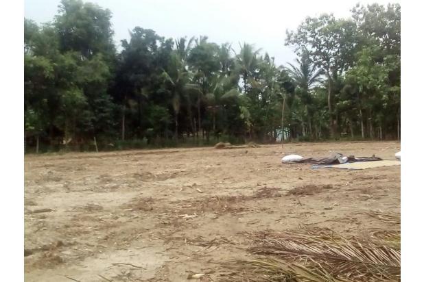 Tanah Kapling Wates: Cash Tempo 12 X Cicil Bebas Bunga 17698845
