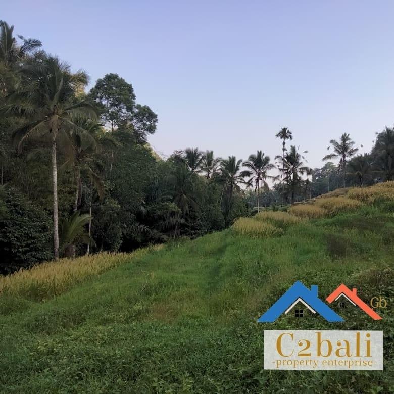 Nice View Land 138 are di Tabanan, Bali