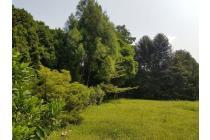 Tanah-Bogor-14