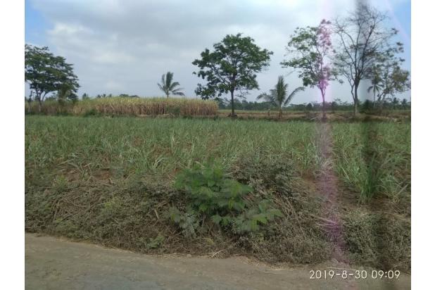 Rp54mily Tanah Dijual