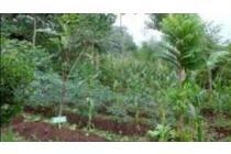 Jual tanah perkebunan di pasuruan