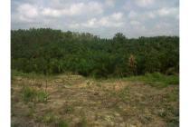 Kebun sawit 27 Ha, Rimbo Panjang Pekanbaru.