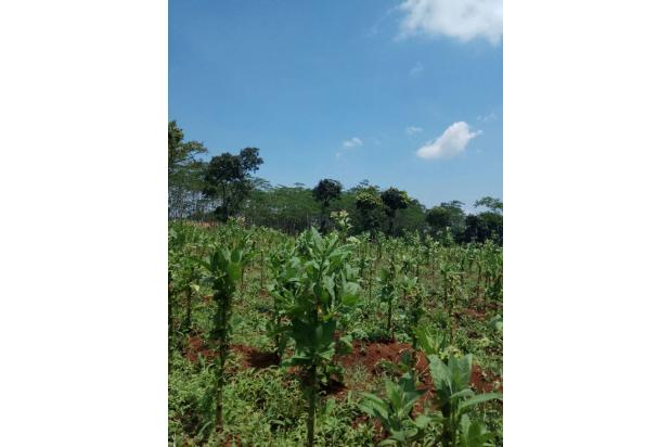 Rp18mily Tanah Dijual