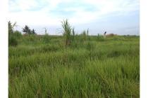 Tanah dijual di Buwit Tabanan Bali. Prospek Cerah!