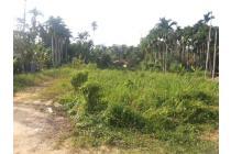 Tanah Murah di Simpang Rimbo Jambi