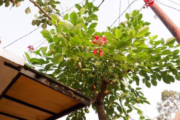 PROMO JUARA : Suku Bunga KPR 6%, SHM Pecah, Garansi Akad 16577336