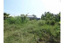 Dijual Murah Tanah Persawahan Di Sardonoharjo Ngaglik
