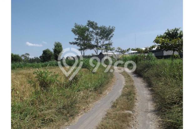 Dijual Murah Tanah Persawahan Di Sardonoharjo Ngaglik 7609826