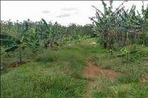 Tanah Subang Dijual Murah Cocok buat Perumahan..!! HUB 0817782111