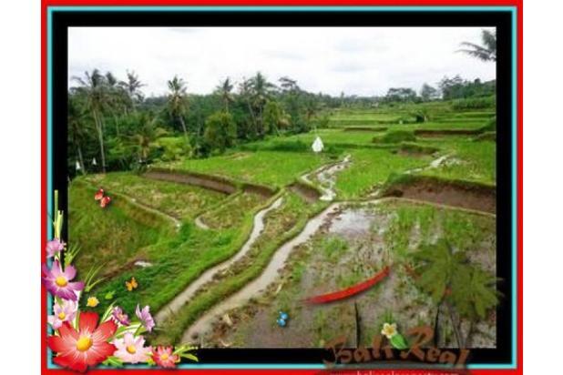 Properti Pilihan, 20.000 m2 View tebing,sawah,sungai ayung di Ubud 3871819