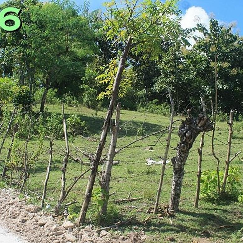 Tanah dijual di Manulai II Kota Kupang