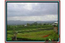 Super Langka Strategis Tanah 5.450 m2 di Tabanan Selemadeg A152