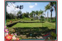 Properti Strategis 6.000 m2  View Sawah di Sentral Ubud TJUB507