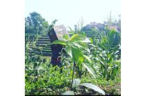 Tanah Kavling Walini Avocado land Bandung Barat Plus Fortuner
