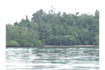 Dijual Tanah SHM luas 1,25 hektar di Pulau Waigeo, Raja Ampat, Papua Barat