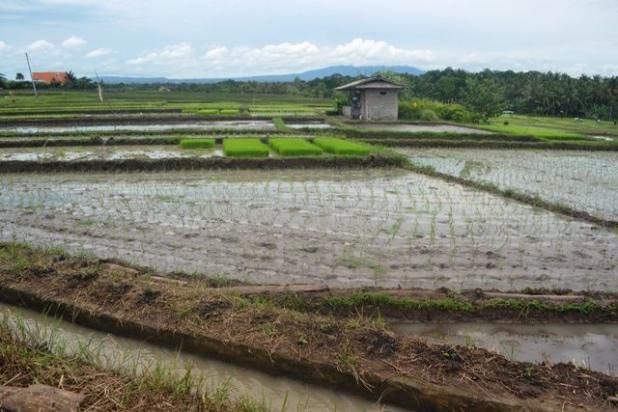 Rp1,66mily Tanah Dijual