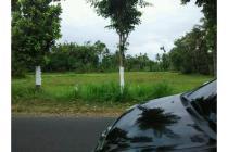 Tanah Pinggir jalan Raya Kalisat - sukowono dekat Rumah makan Gizi ikan