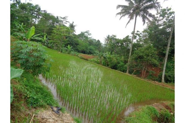 Rp8,77mily Tanah Dijual