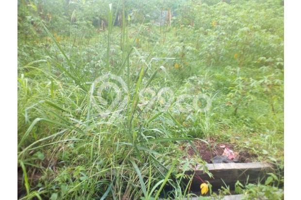 Kami Transaksikan Tanah Matang SHM-IMB: Green Melati Duren seribu 15036911