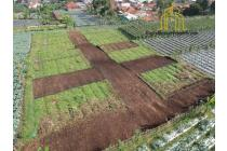 Dijual Murah Tanah Kavling Matang Cisarua Bandung