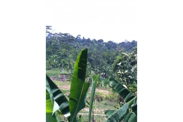 Tanah Persawahan di Bojong Koneng Sentul City 2349971