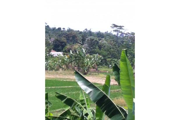 Tanah Persawahan di Bojong Koneng Sentul City 2349982