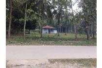 Tanah murah perkebunan kompkles SMK 1 pulubala