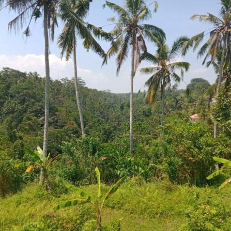 DIJUAL TANAH LOS SUNGAI full view sawah Di Ubud Gianyar Bali