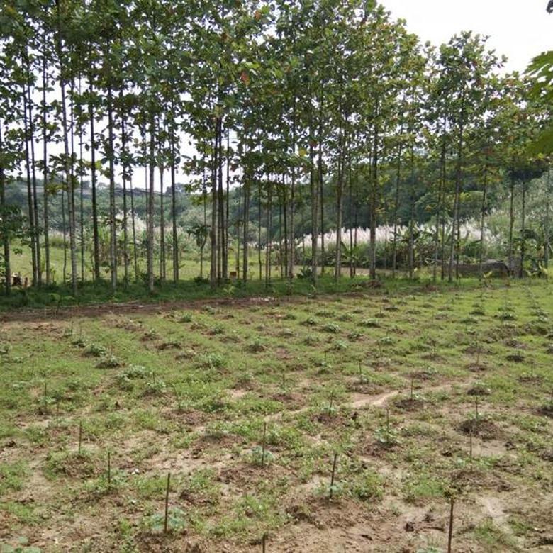 Tanah di Daerah Rumpin Bogor Seluas 16 Hektar