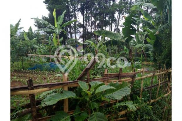 Dijual Tanah daerah Cisarua Bandung, Jual Tanah di Bandung 11041486