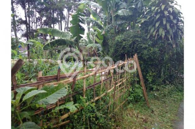Dijual Tanah daerah Cisarua Bandung, Jual Tanah di Bandung 11041483