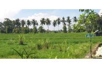tanah super murah sangat cocok di kavling maupun dijadikan villa komplek dan komersial ubud bali